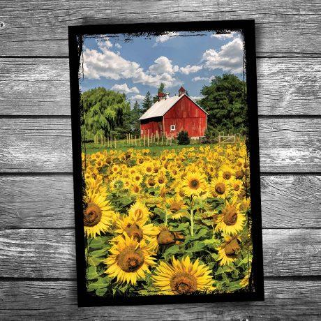 130-Field-of-Sunflowers-Postcard