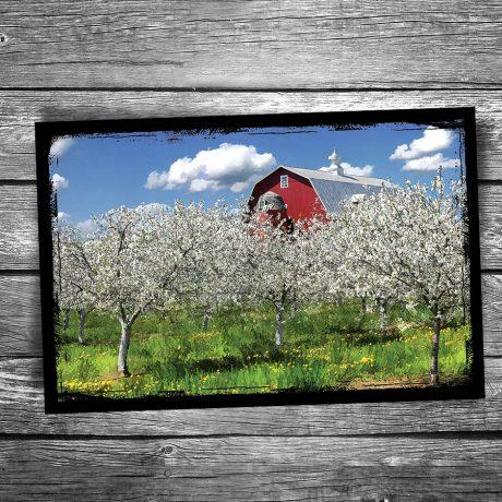 139-Cherry-Blossoms-Door-County-Postcard