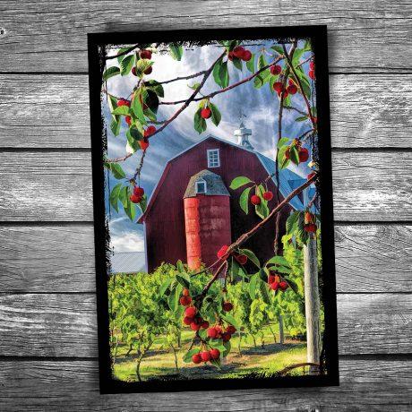 151-Door-County-Cherries-Barn-Postcard