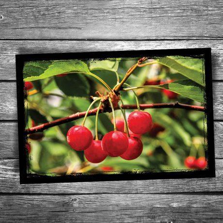 153-Door-County-Cherry-Postcard