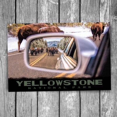 Yellowstone National Park Bison Postcard