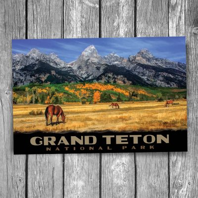 Grand Teton National Park Horses Postcard