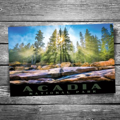 Acadia National Park Shore Rays Postcard