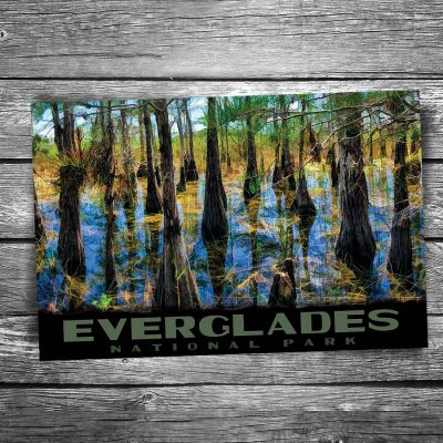 Everglades National Park Cypress Trees Postcard