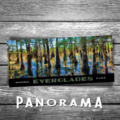 Everglades Panorama Postcard
