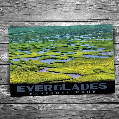 Everglades National Park Swamp Postcard