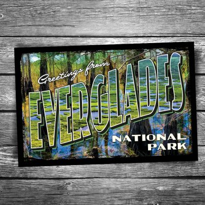 Greetings From Everglades National Park Postcard