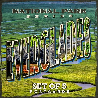 Everglades National Park Postcards | Set of 5