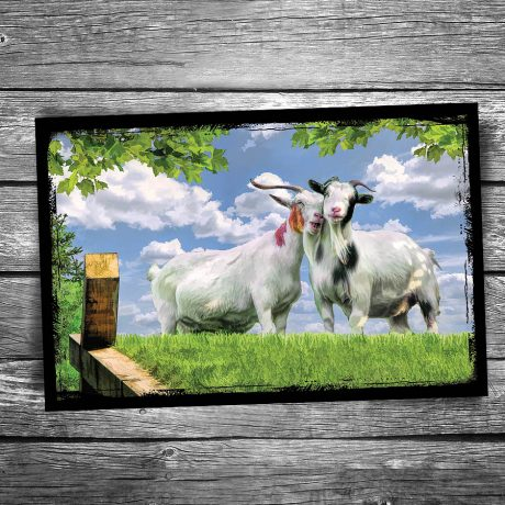 229-Al-Johnsons-Goats-Couple-Door-County-Postcard
