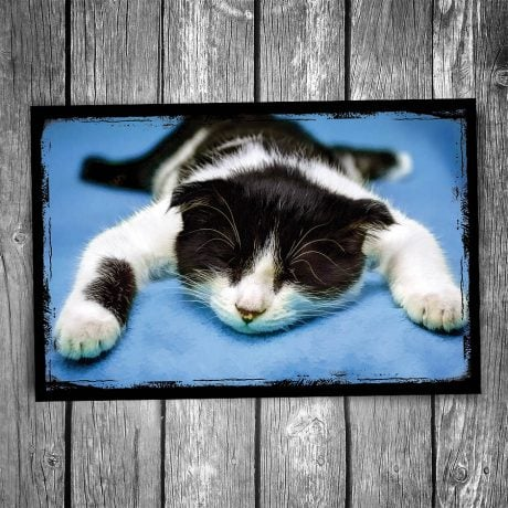 Exhausted Kitten Postcard