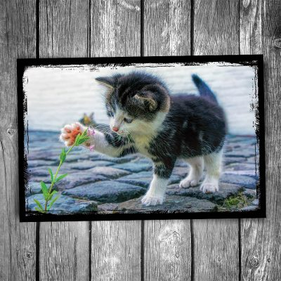 Playful Kitten Postcard