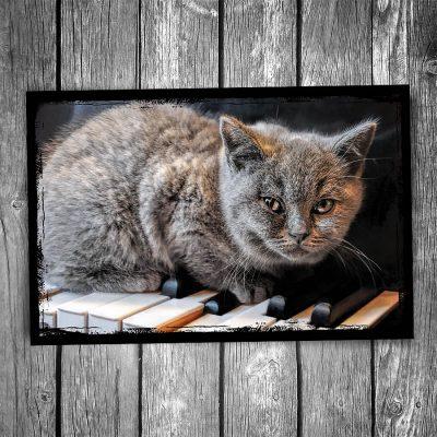 Serious Composer Cat Postcard