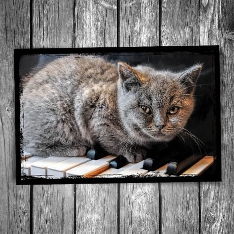 Serious Composer Cat Postcard