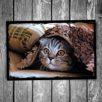 Carpet Hiding Cat Postcard
