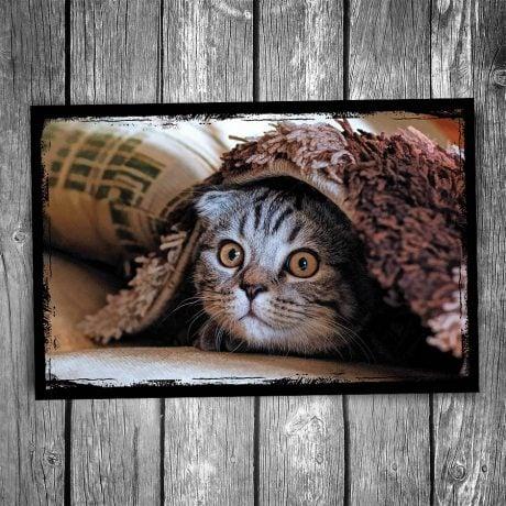 Carpet Hiding Cat Postcard
