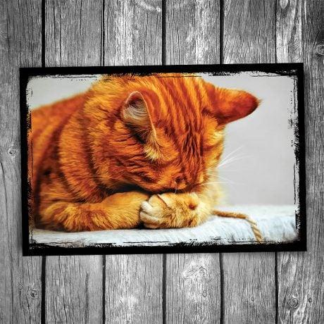 Hide and Seek Cat Postcard