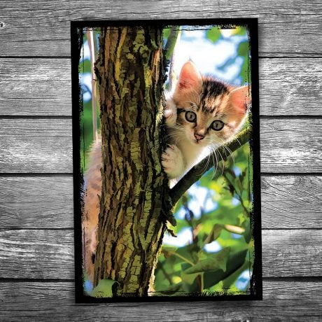 Cat in a Tree Postcard