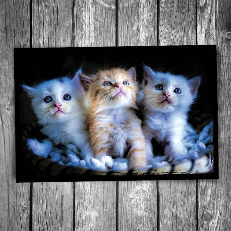 Basket of Kittens Postcard