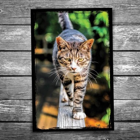 If Looks Could Kill Cat Postcard