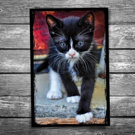 Black and White Kitten Postcard
