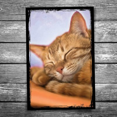 Sweet Dreams Cat Postcard