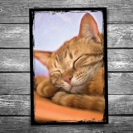 Sweet Dreams Cat Postcard