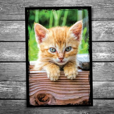 Hello Kitty Cat Postcard