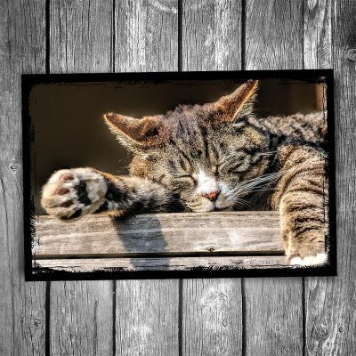 Nap Time Cat Postcard