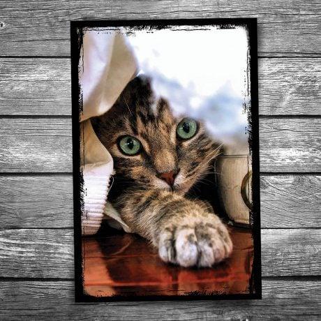 Peek a Boo Cat Postcard
