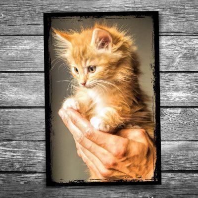 Fuzzball Kitten Postcard