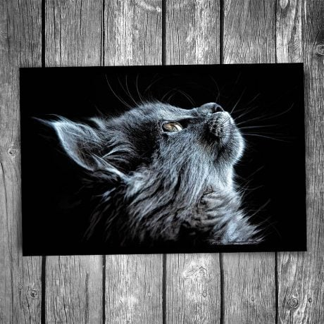 Black Cat Portrait Postcard