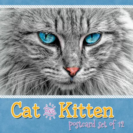 Cat and Kitten Postcards – Set of 28