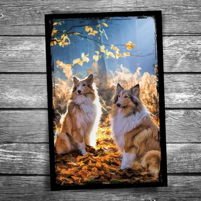 Twin Collies Postcard