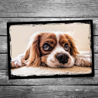 Waiting Dog Postcard