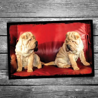 Wrinkles Dog Postcard