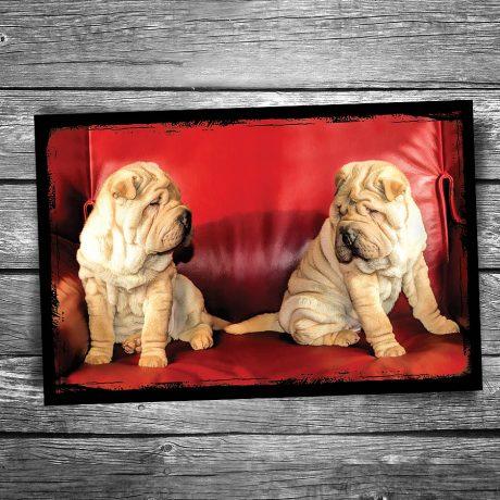 Wrinkles Dog Postcard