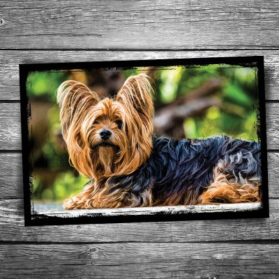 Shaggy Terrier Dog Postcard