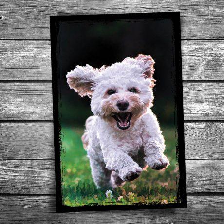 Joyful Dog Postcard
