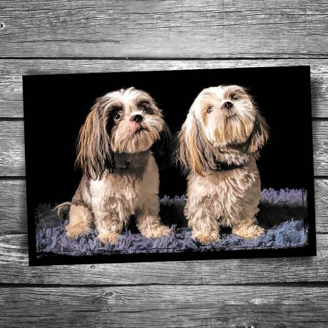 Shaggy Twin Dogs Postcard