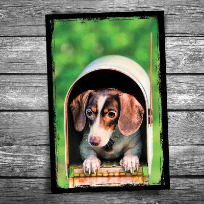 Dog in Mailbox Postcard