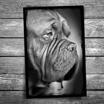 Bruno Dog Postcard