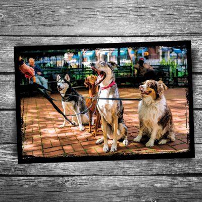 Dog Walking Postcard