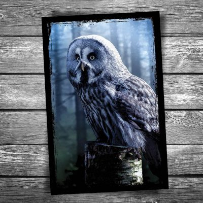 Wood Owl Postcard