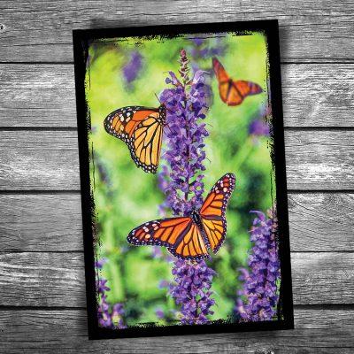 Orange Monarch Butterfly Postcard