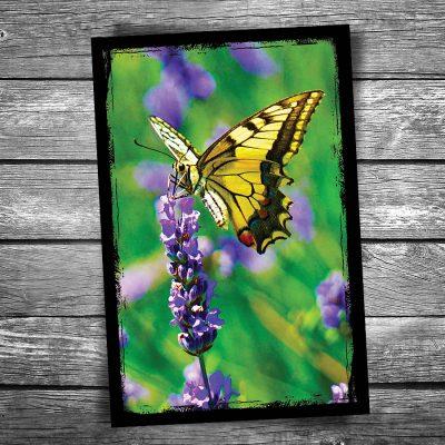 Yellow Monarch Butterfly Postcard