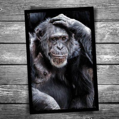 Good Grief Monkey Postcard