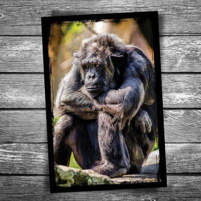 Grumpy Monkey Postcard