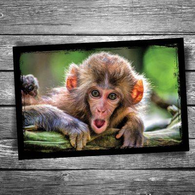 Surprised Monkey Postcard