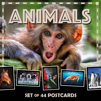 Animal Postcards | Set of 44