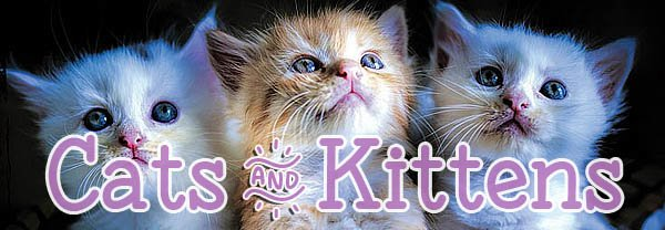Cat and Kitten Postcards